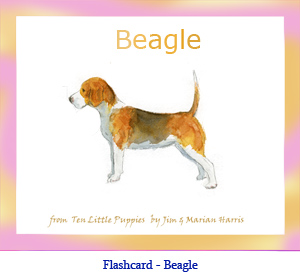 Beagle Dog Flashcard– with breed name