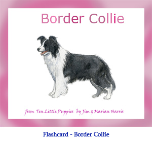 Border Collie Dog Flashcard– with breed name