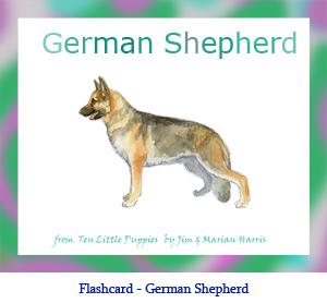 Newfoundland Dog Flashcard With Breed Name German Shepherd