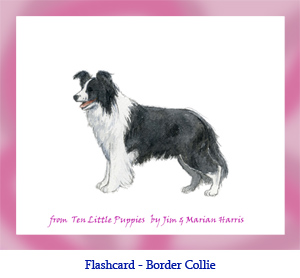 Border Collie Dog Flashcard – no breed name