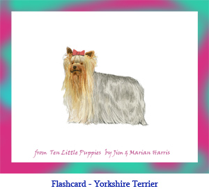 Yorkshire Terrier Dog Flashcard – no breed name