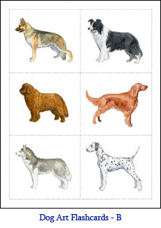 Small Format Dog Flashcards – Set B – Dogs