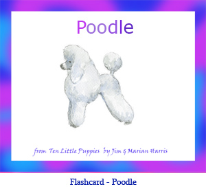 Poodle Dog Flashcard– with breed name