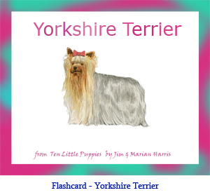 Yorkshire Terrier Dog Flashcard– with breed name